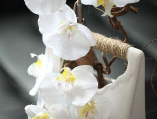 Les vrais-fausses plantes de chez Jardin Déco