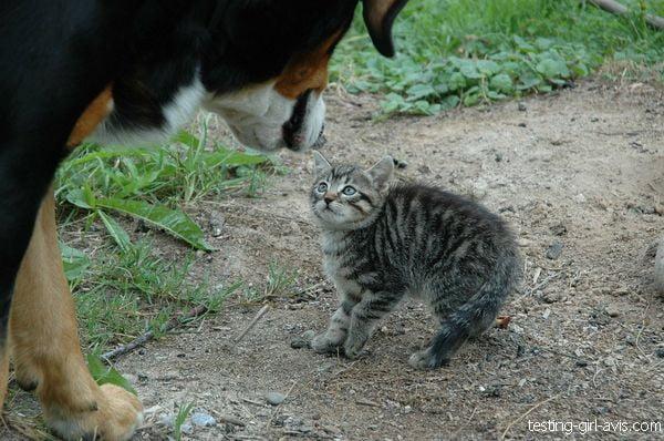 chat peur
