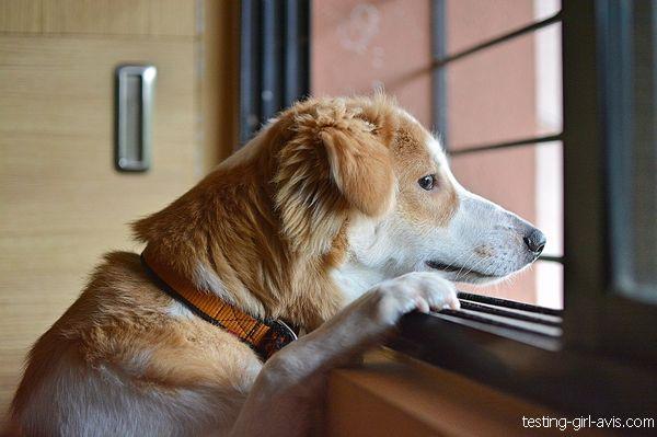 chien qui attend