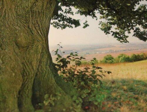 L'arbre de Johanne roman